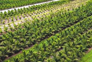 Tree nursery for commercial landscaper